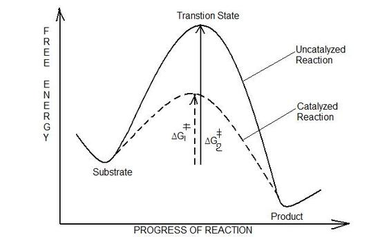 ordnung chemischer reaktionen